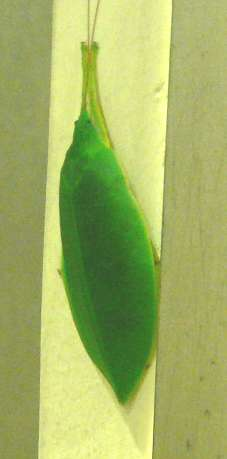 Leaf060414_005s