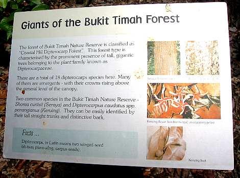 bukit_timah14