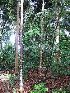 bukitbatok_nature_park4s