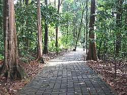 bukitbatok_nature_park6s
