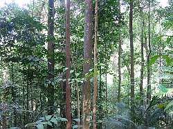 forest-sJPG